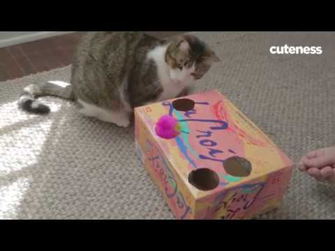 How to make a diy soda box cat toy youtube for How to make a cat toy out of a box