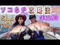 【スーパーライトジギング】SLJで真鯛連発!釣りビジョンLet's tryソルトゲーム#6/あぜっち劇場