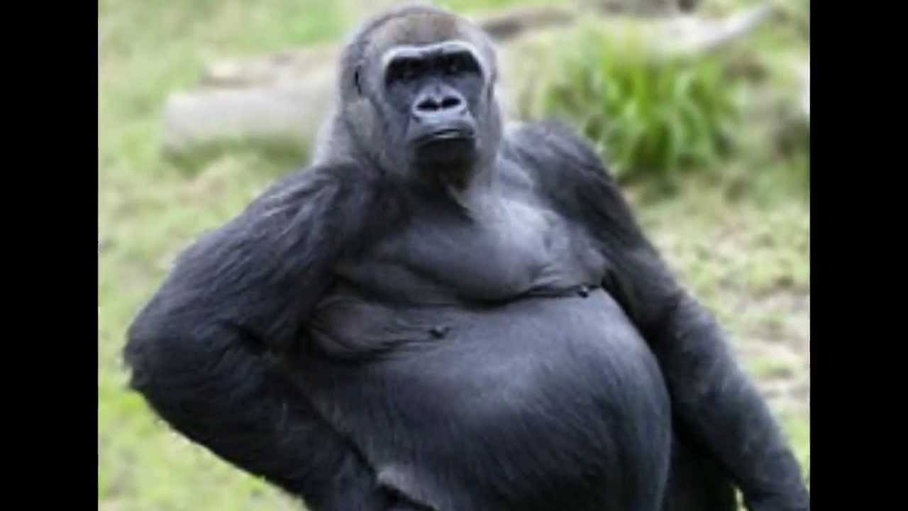 Equal rights for great apes