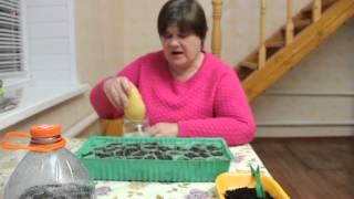 видео Семена земляники — где покупать,посев, посадка рассады и выращивание.