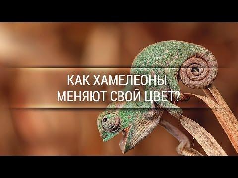Как хамелеоны меняют свой цвет? [Veritasium]