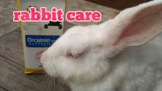 How to Care for a House Rabbit