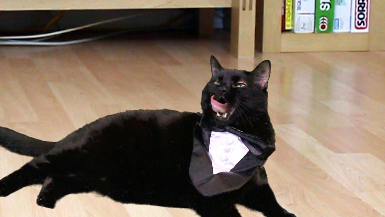 Psy Oppa Gangnam Style Preppy Kitty Style