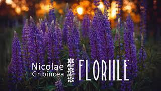 Descarca Nicolae Gribincea - Floriile 2020