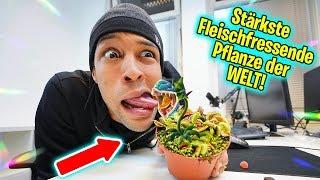 Experiment: Fleischfressende Pflanze VS Zunge   Was passiert?