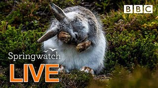 Cute wildlife cams Day 8 Part 1  🐰🐿🐣 | BBC Springwatch