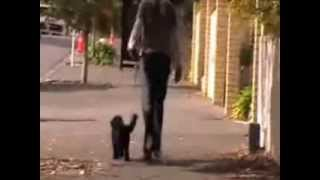 Dog Training In London How To Stop My Dog Jumping Up