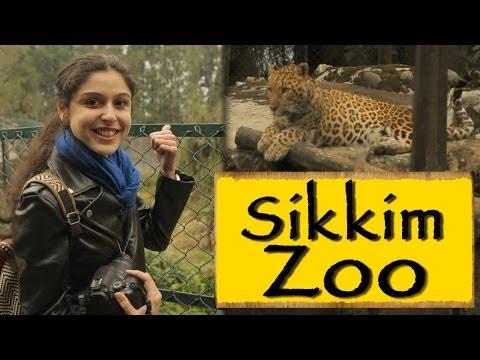 Himalayan Zoological Park|| Gangtok || Sikkim