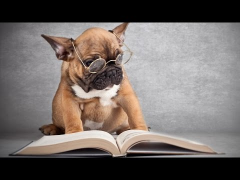 10 Smartest Dog Breeds In The World