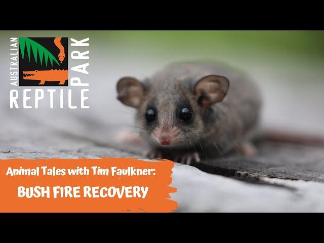 ANIMAL TALES WITH TIM FAULKNER | EPISODE 38 | AUSTRALIAN POSSUMS