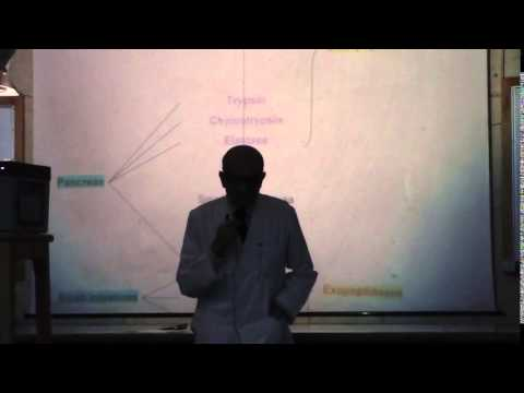 3) Dr. Rasheed 16-02-2015 [ Types of diabetic coma and Absorption of proteins ]