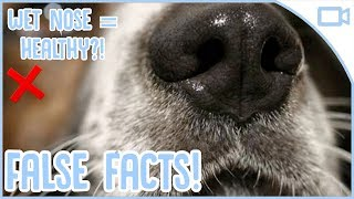 5 False Facts About Dogs!