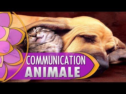 COMMUNICATION AVEC VOS ANIMAUX