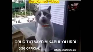 Dilenci Kedi