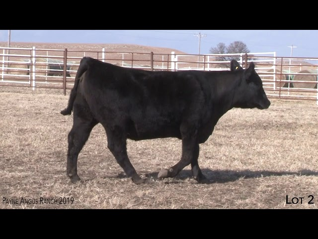 Payne Angus Ranch Lot 2