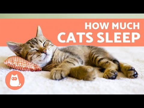 Pet Corner - How Much Do Cats Sleep Per Day?