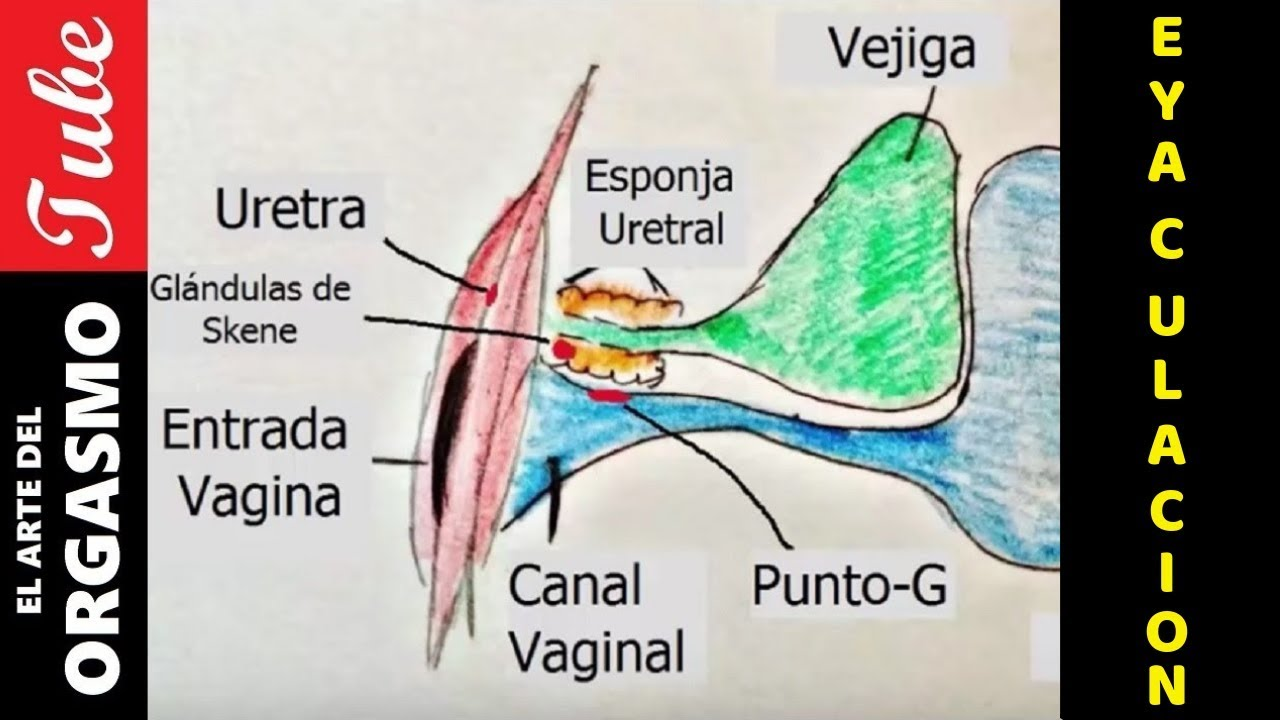 Authoritative Eyacular en la vagina