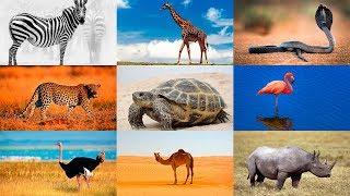 Как говорят животные. Развивающее видео для детей. Животные Африки 2. Голоса животных