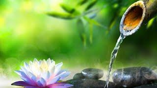 Relaxing Music 24/7, Meditation Music, Sleep Music, Healing Music, Yoga, Sleep, Study, Calming Music