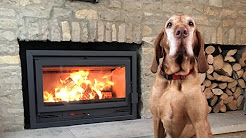 Seasonal Affective Disorder and dogs. How to stay fit and healthy.