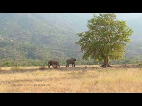 Coimbatore-Mangarai-Elephants