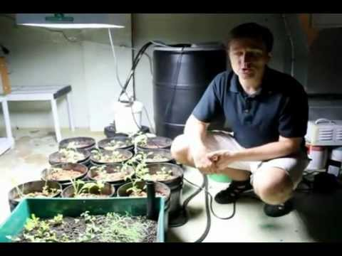 Dr. Berg Grows Cruciferous Vegetables in his Basement (Part 1)