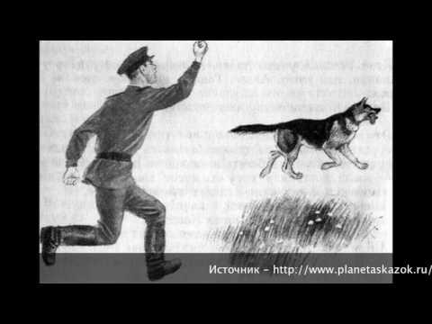Юрий Коваль. Рассказ Алый.