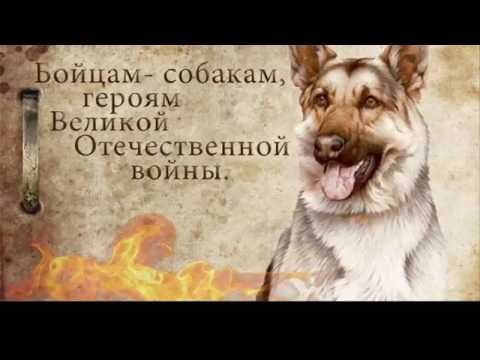 Легендарный пёс сапёр Джульбарс