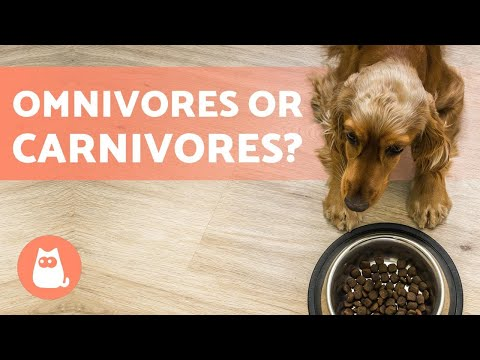 Are Dogs OMNIVORES or CARNIVORES? 🥩🥦 All the FACTS