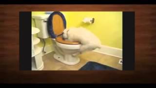 Самые смешные ролики про животных 7