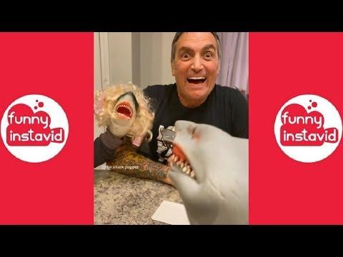 Shark Puppet Funny Instagram Videos Compilation 2019 - Funny InstaVID
