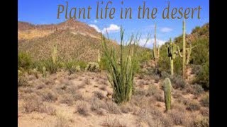 Plant life in the desert