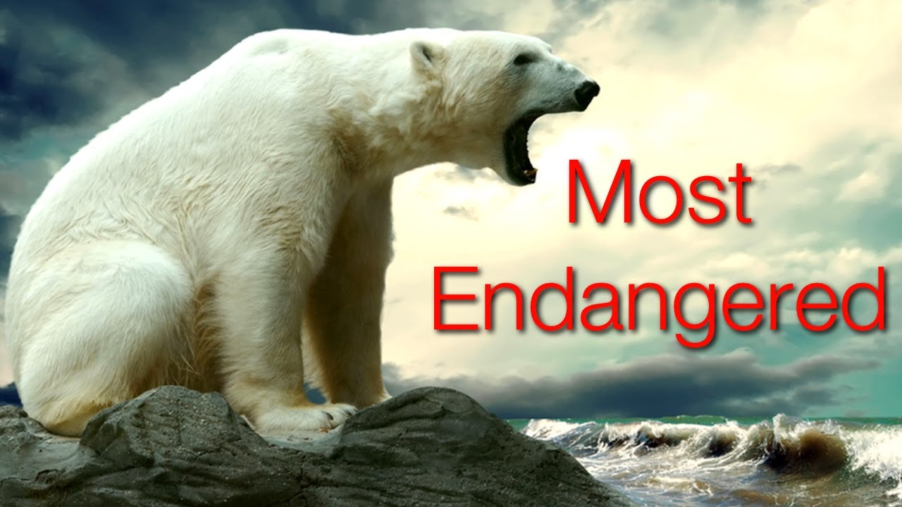 10 Critically Endangered Animals - YouTube