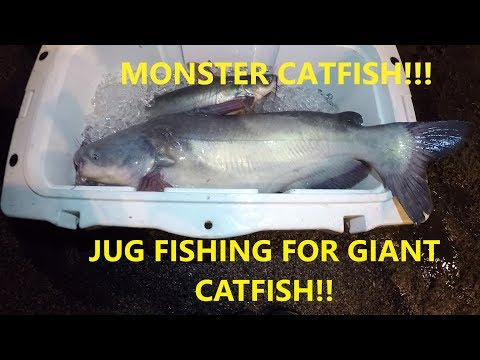 Jug Fishing For Catfish - Best Bait For Catfish - Catching Catfish At Night - Jug Fishing