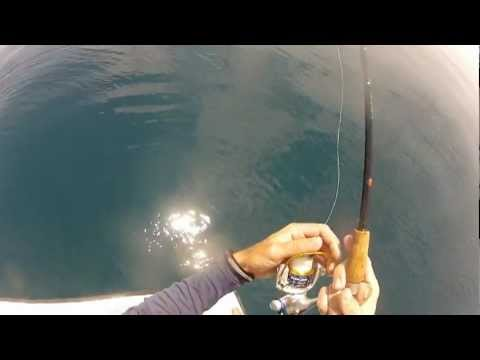 How to Catch Mangrove Snapper on Light Tackle