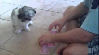 Люди & Собаки
