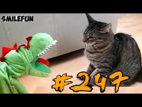 2019      2019   Funny Cats  247