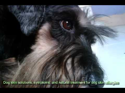 Dog skin solutions, symptoms, and natural treatment for dog skin allergies