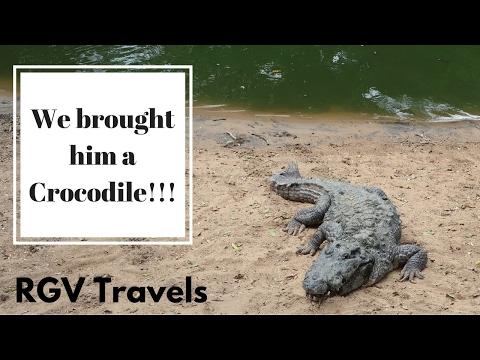 We brought him a Crocodile!!! | Chennai | Madras Crocodile Bank , Shore Temple || RGV Travels