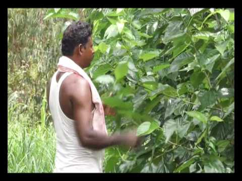 2 साल एक पड़ताल - वाह किसान | Wah Kisan - Success Story - 14 (Spot)