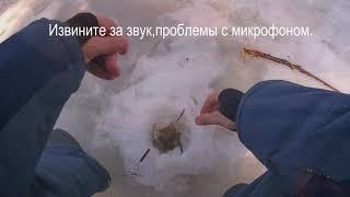 Закрытие зимней рыбалки Окунь Плотва 28 03 2021