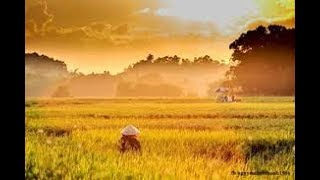 { Hát chèo đặc sắc 2018 } Bài ca về đất Mê Linh- Lời Trần Quang Đẩu- Giọng hát NSUT Minh Phương