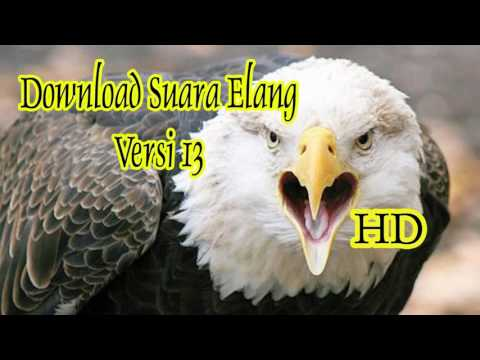 Download Suara Masteran Burung Elang Versi 13