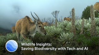 Wildlife Insights: Saving Biodiversity with Tech and AI