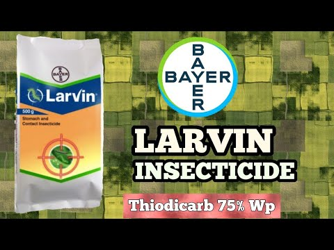 LARVIN INSECTICIDE || THIODICARB 75% WP || Bayer Crop Science ||