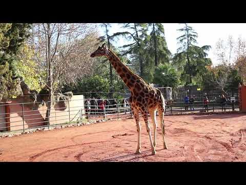 Bulería y su hija Kenia, nuevos miembros de la familia del zoo