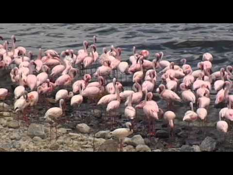 Lake Bogoria & Lake Baringo Vacation Travel Video Guide
