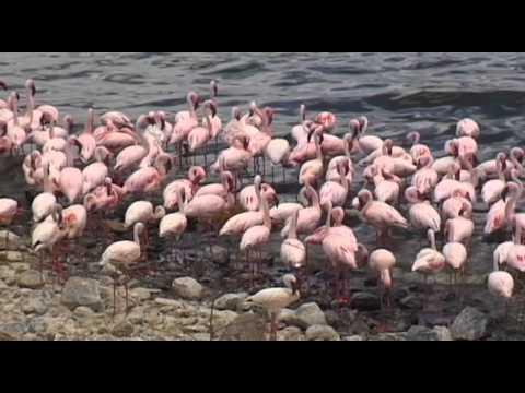 Lake Bogoria & Lake Baringo Vacation Travel Video Guide