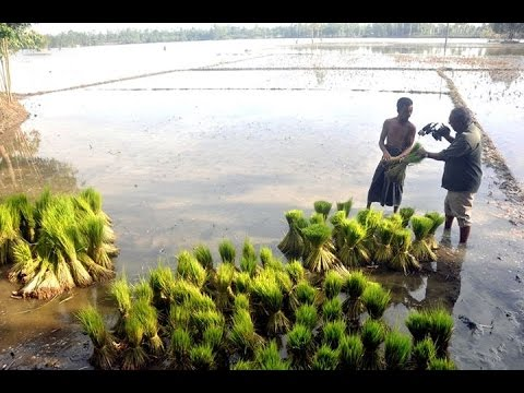 The farmers of the north fight back against flood
