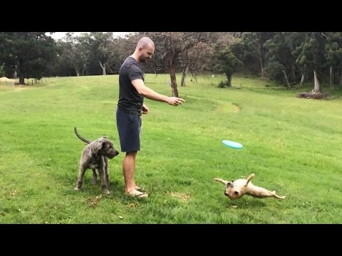 hqdefault funny frisbee fails,frisbee best of the funny meme